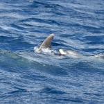 Delfin-07.jpg