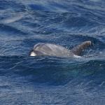 Delfin-17.jpg