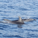 Delfin-18.jpg