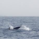 Delphin-10.jpg