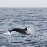Delphin-11.jpg