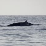 Delphin-12.jpg