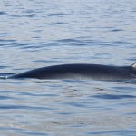 Delphin-13.jpg
