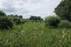 Naturschutzgebiet Kühkopf